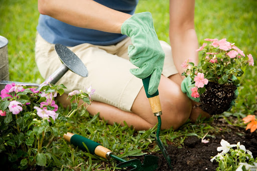 Woman removing shrubs from the garden to be replaced by low-allergen options