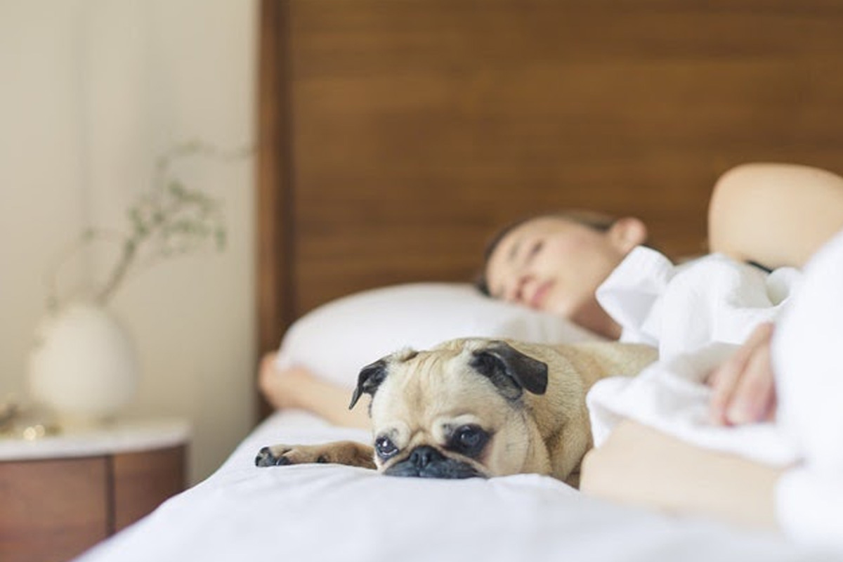 Woman sleeping on the bed with a pug